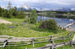 Mount Moran View (V. C. Wald) Tags: grandtetonnationalpark jacksonlake cathedralgroup signalmountainlodge