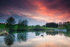 Peaceful (Zagros.os) Tags: trees sunset lake green nature water clouds swim canon geese pond tokina 1116 1000d