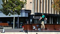 Skateboarding Bliss (Theen ... busy) Tags: boy people brown tree green water plane bench flying zoom pigeons samsung tshirt grace cap skateboard adelaide skater flowing fountains teenage northterrace theen