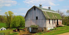 In use.....for now (Images by MK) Tags: trees white wisconsin barn neglect rural canon fence farm shingles farming neglected fences silo cupola dome wi manure whitebarn disrepair delapitated spreader t2i happyfencefriday barncleaner