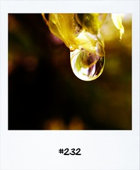 "#DailyPolaroid of 18-5-13 #232 • <a style=""font-size:0.8em;"" href=""http://www.flickr.com/photos/47939785@N05/8782459170/"" target=""_blank"">View on Flickr</a>"