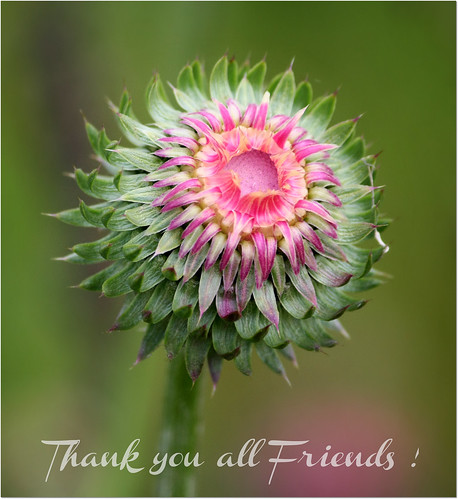 Thank  you all Friends !