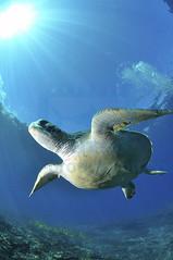 2012 07 METTRA OCEAN INDIEN 0171