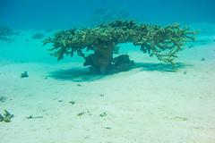 DSC01004.jpg (b34chd00d) Tags: underwater redsea egypt sharmelsheikh scuba diving