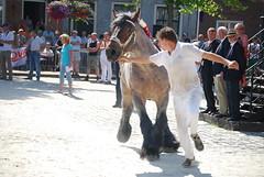 trekpaardkeuring ijzendijke 21072013 3765 (jo_koneko_san) Tags: horses horse holland netherlands cheval nederland zeeland chevaux paard hollande zeeuwsvlaanderen 2013 ijzendijke parden trekpaard zeeuwstrekpaard trekparden