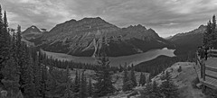 Peyto Lake (JsonConnelly) Tags: canada bc view britishcolumbia pano trail banff viewpoint peytolake jasonconnellyphotography