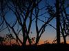 IMG_0980 (Dan Correia) Tags: amherst twilight sunset 15fav topv111 topv333 topv555
