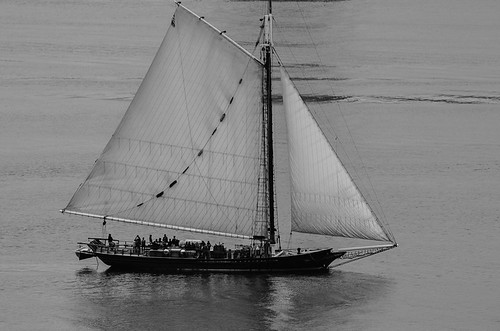 nyc blackandwhite newyork boats nikon manhattan hudson sailboats