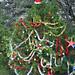 Trees_of_Loop_360_2013_023