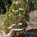 Trees_of_Loop_360_2013_245