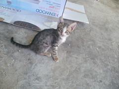 P1010046 (ciciku) Tags: white animal cat turkey trkiye turquia kedi sokak hayvan kedisi hayvanlar ciciku frknyvz