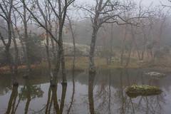 (Mahandeep Singh) Tags: bosque invierno niebla 28mm28 lacabrera olympusgzuiko