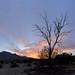 Palm Springs sunset 2014