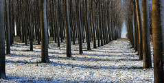 (tozofoto) Tags: wood travel trees winter snow cold travelling ice colors forest canon landscape lights europe hungary shadows snowy zala tozofoto