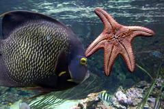 Aquarium de Paris  (21) (Mhln) Tags: paris aquarium requin poisson trocadero poissons meduse 2015 cineaqua