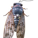Cicada do not Speak to the Japanese: The Japanese dont really speak to each other! thumbnail