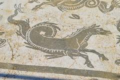 EDIFICIO MOSAICO NEPTUNO (6) (DAGM4) Tags: espaa sevilla spain andalucia italica spqr santiponce