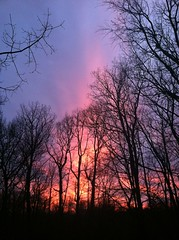 Gloaming (ataxiagallery) Tags: trees nature outdoors evening colorful dusk gloaming
