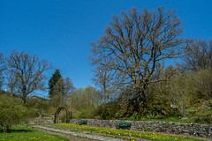 spring in the rosegarden-09388 (TB 5161) Tags: nature norway garden norge spring outdoor sony natur bergen hordaland fana noreg milde aboretet sonyslta77
