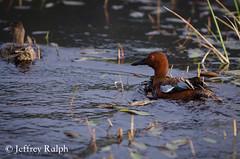 marsh7 (ralphsplitter) Tags: county nature centennial idaho marsh camas