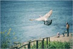 summer is coming (***toile filante***) Tags: sun bird beach sunshine strand river dove may mai fluss taube sonne vogel sonnenschein