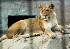_DSC7152.jpg (William Carlton Photography) Tags: animals zoo sacramento
