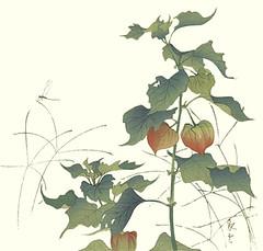 Japanese-lantern and wire grass (Japanese Flower and Bird Art) Tags: flower art grass japan print japanese wire poaceae woodblock nihonga physalis japaneselantern indica solanaceae alkekengi eleusine readercollection