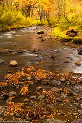 Ro Cautn (alainmacias) Tags: paisajes autumn cautn tallerfotografico landscape river abtao ro otoo araucana canoneos7dmkii parquenacionalconguillo ef24105f4lusm curacautn ixregin chile cl