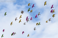 Colores (David Fotografa) Tags: sky colors fly aves colores pjaros cielo palomas volar bandada canon70d
