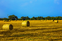 _40A3469 (ChefeGrande) Tags: silhouette rural landscape gold texas outdoor farm bales