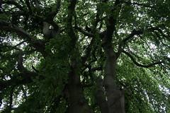 von unten (gela.k) Tags: idylle italien italy baum tree venedig venezia venice
