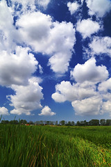 Spring Clouds (Robyn Hooz) Tags: blue sky verde green primavera grass clouds spring erba cielo dreams sogni