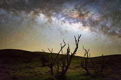 Terrestrial Connection (uldericoimages) Tags: trees color green nature night contrast stars landscape outdoors photography hawaii adventure astrophotography astronomy bigisland maunakea milkyway