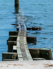Walk Steady on this Jetty (tquist24) Tags: ocean blue beach water nikon bokeh connecticut jetty shell newengland snail depthoffield shore curve hightide westbrook nikond5300