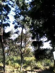 "Pengembaraan Sakuntala ank 26 Merbabu & Merapi 2014 • <a style=""font-size:0.8em;"" href=""http://www.flickr.com/photos/24767572@N00/27162901035/"" target=""_blank"">View on Flickr</a>"