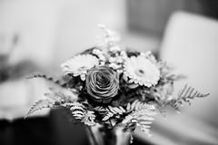 DSC02458 (wildbam25) Tags: blumen flower rose bokeh dof schwarzweiss weis schwarz black white blackandwhite bnw sony ilce7m2 mitakon zhongyi f095 50mm bokehmaster