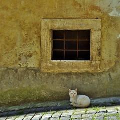 finestra con gatto (archifra -francesco de vincenzi-) Tags: archifraisernia francescodevincenzi venafro molise italy gatto gato chat cat micio urbandetail finestra fentre grata regnodinapoli