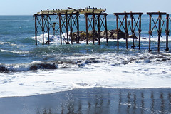 Muelle de Llico / Vichuquen / Chile (Leon Calquin) Tags: chile travel santiago muelle flickr photos viajes leon fotos catalog diseo videos catalogo llico vichuquen calquin leoncalquin quincal
