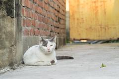 P4085762 (daisuke1230) Tags: cat olympus neko em  m43