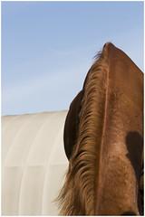 Scuderie San Martino (GiuliaBracchiPH) Tags: horses horse brown canon cavalli cavallo maneggio