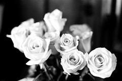 The Roses (stillsguy) Tags: light roses bw ny 50mm spring nikon natural 400 bloom fujifilm neopan nikkor delicate expired f5 ais f12 directional mothersdayflowers