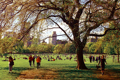 Sheep Meadow 3 (fabiopaivareis) Tags: park usa newyork central frias eua passeio sheepmeadow novaiorque novayork estadosunidosdaamrica