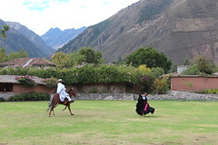 IMG_6824 (University of Pennsylvania Alumni) Tags: peru machu picchu cuzco llama