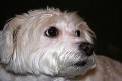 Princesa (Antnio Jos Rocha) Tags: co amiga cadela leal animaldecompanhia