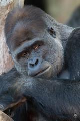 Taronga Park Zoo (peterriordan70) Tags: sydney tarongazoo