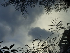DSC01500 (asmamahmud) Tags: moon inspiration by clouds day with buddy a