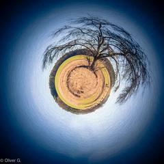 tree (jeolpe) Tags: tree little planet baum littleplanet 1homepage