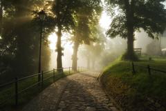 Przemyl (Mirek Pruchnicki) Tags: park street light tree morninglight 14 polska mm samyang przemyl wojewdztwopodkarpackie