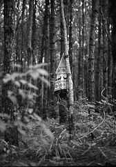 000028bw (Hunh Thanh Thng) Tags: tree canon vietnam viet da rung dalat cay nam lat vit lt cy  rng