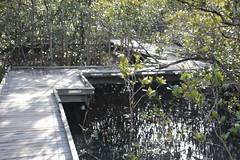 SOP-040716-017 (alison.klein) Tags: wetlands mangroves sydneyolympicpark